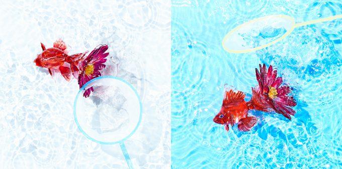 KANA-BOON「アスター」ジャケット用写真